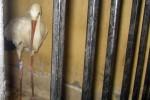 De beruchte spionerende vogel
